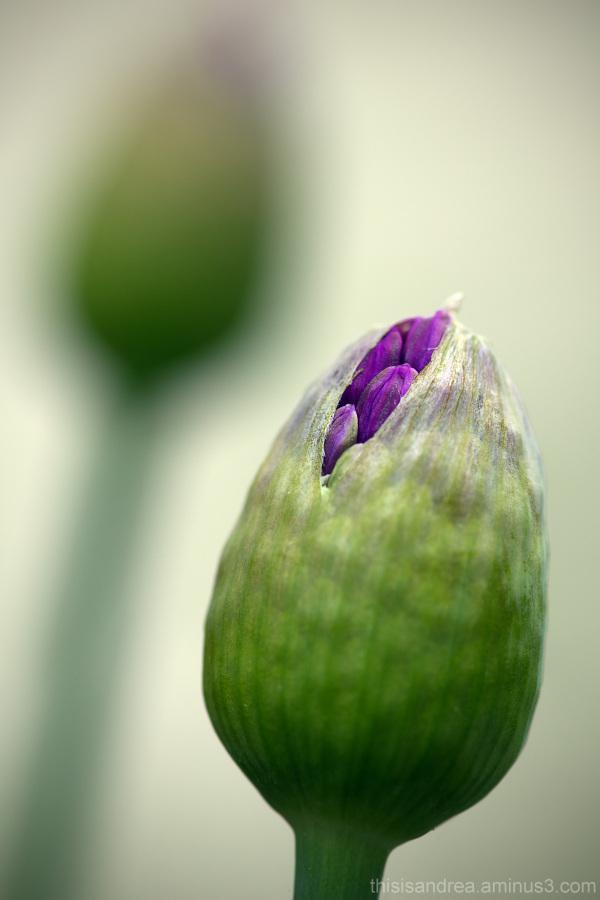 softer spring