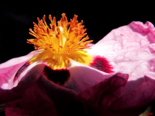 Eruption florale...
