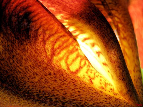 Iris et soleil