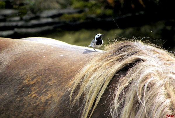 L'oiseau et le cheval