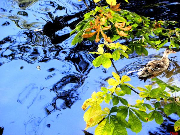 La nature en reflets