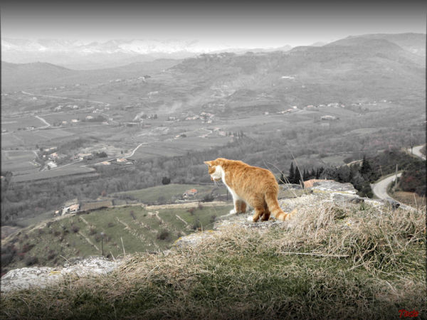 Solitude du chat