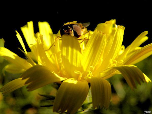La fleur et la mouche