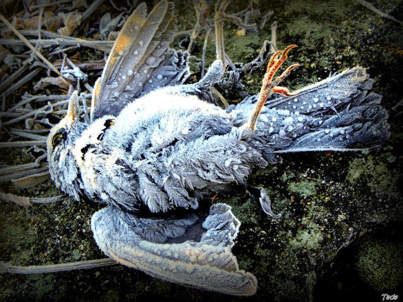 La mort de l'oiseau