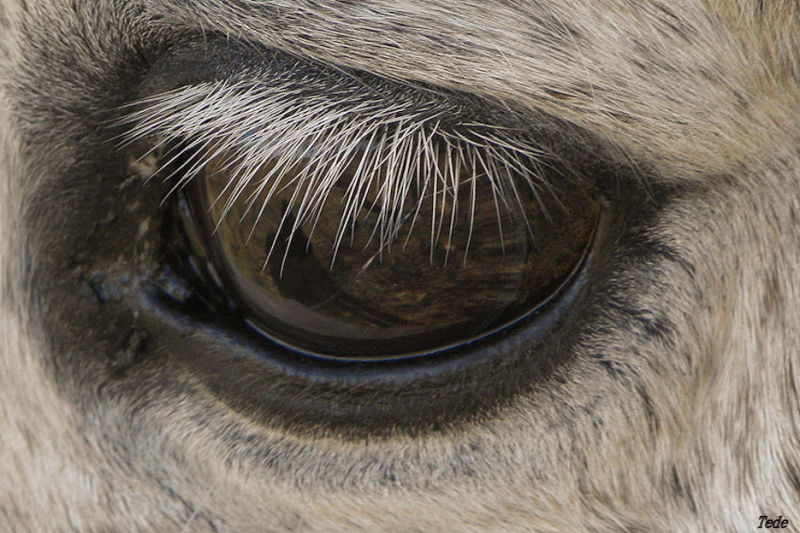 Dans l'oeil du cheval