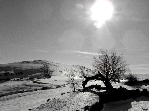 L'arbre et la neige