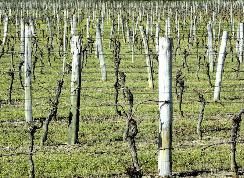 Piquets de vigne