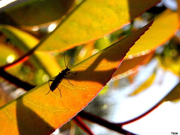 L'insecte et l'ombre