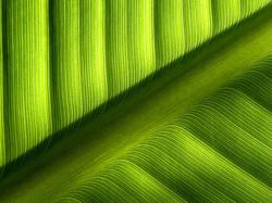 La  ligne  verte...