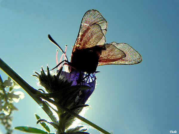 L'insecte et le soleil