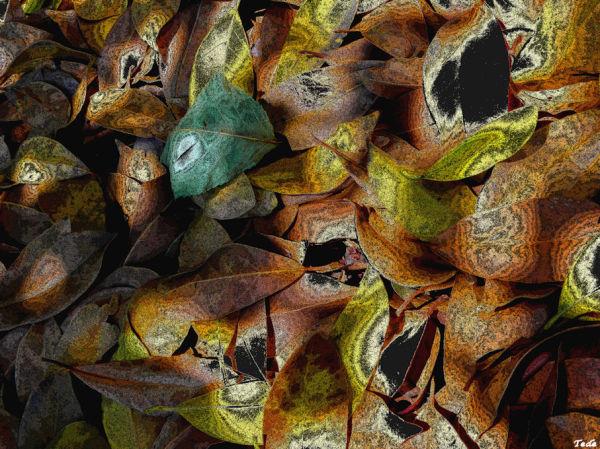 Les  feuilles  mortes...