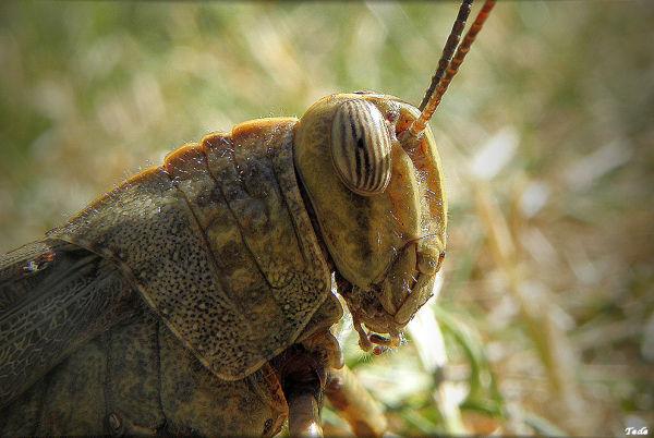 Une sauterelle dans le jardin