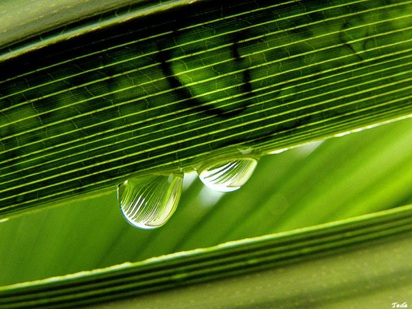 Feuille de palmier et gouttes de pluie