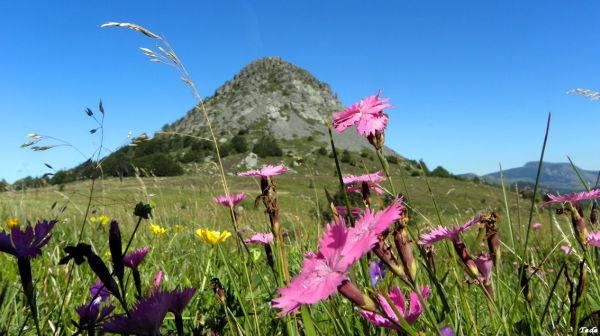 Le  Mont  Gerbier des Joncs...