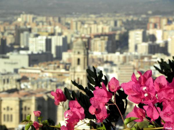Fleur  sur  la  ville...