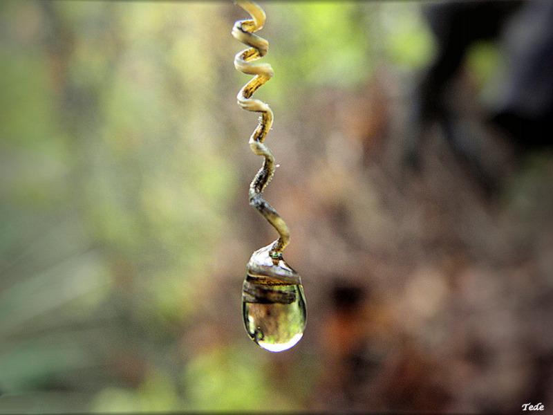 Perle d'eau