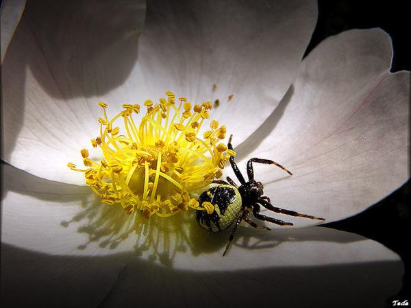 L'araignée et la fleur
