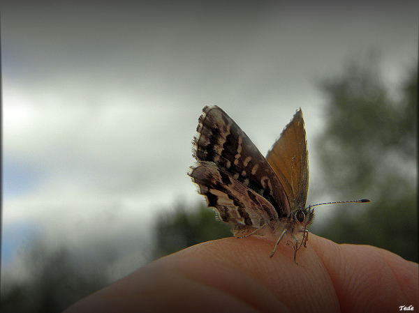 Butterfly  landed  on  my  finger...