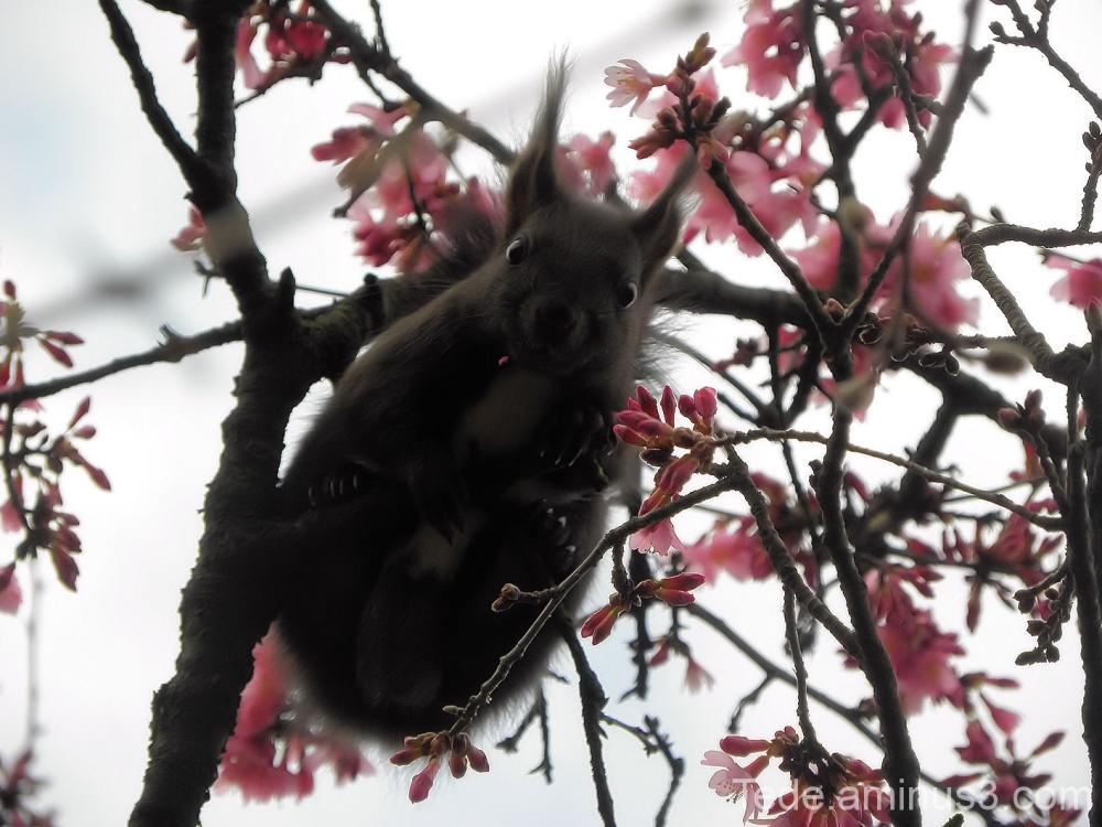 L'écureuil et les fleurs