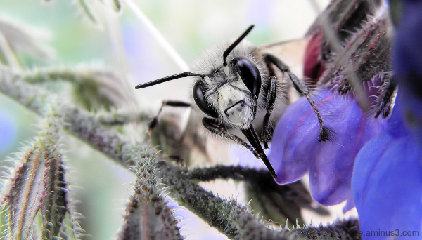 Gros plan sur l'abeille