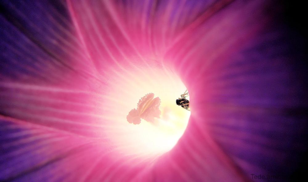 Insecte et volubilis