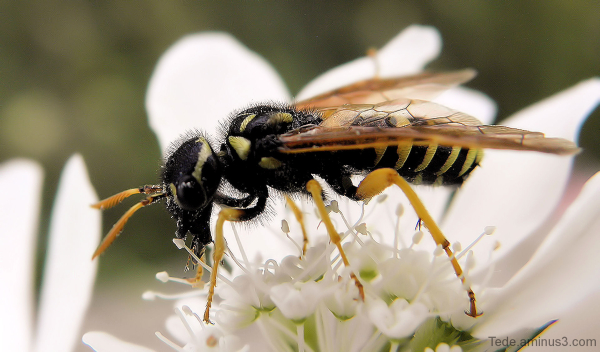 Close up  insect  6/7