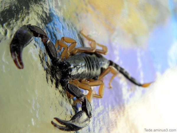 Le scorpion