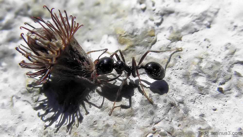 La fourmi au boulot