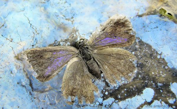 La mort du papillon