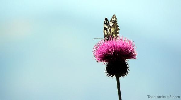 Les  ailes  du  désir...