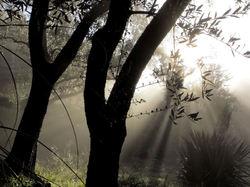 Il  n'y  a  pas  de  lumière  sans  ombre...