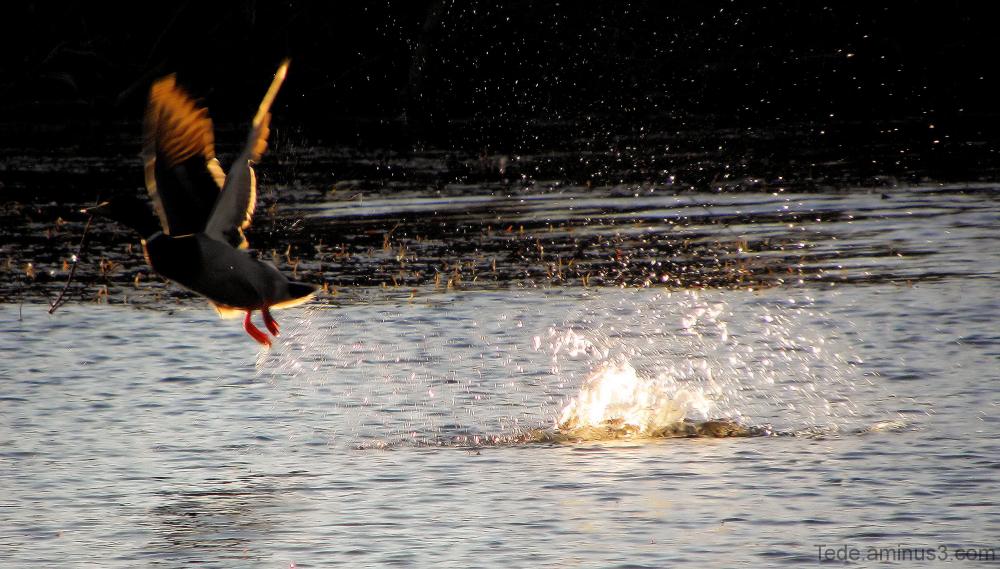 Le canard et la lumière