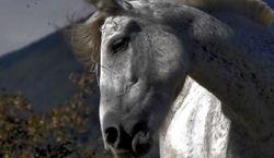 Et  le  cheval  longea  ma  page...