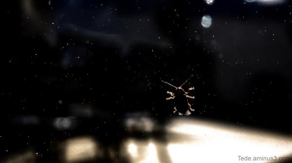 Insecte sur une fenêtre