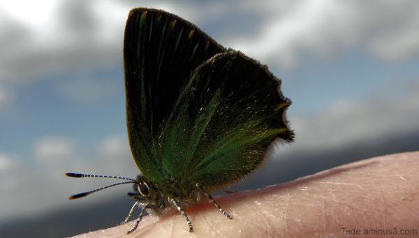 Azur vert