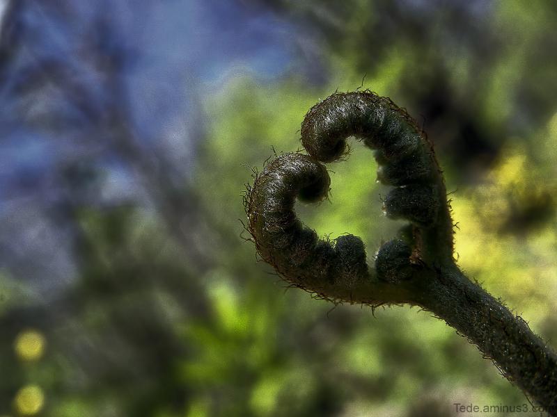 Au  coeur  de  la  nature...