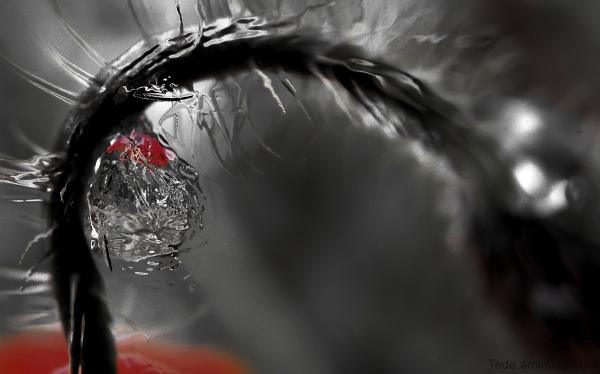 Goutte de pluie et coquelicot
