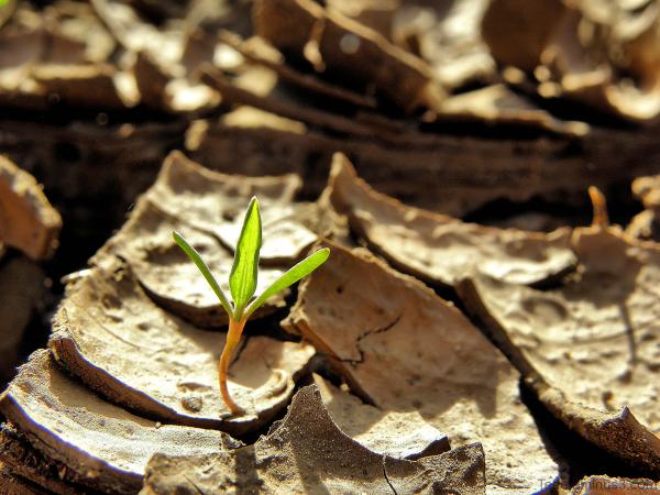 Plante et sècheresse