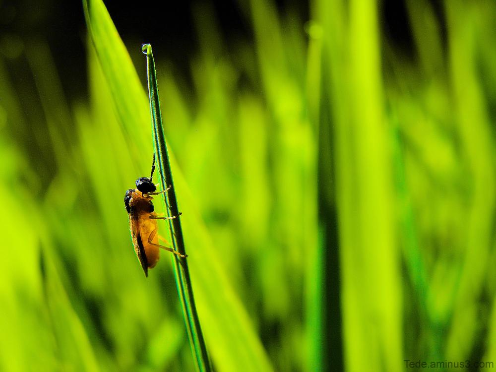 Insecte et verdure