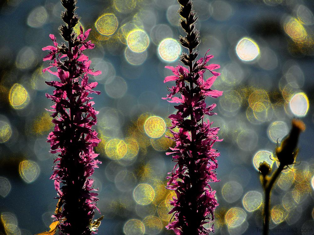 Fleurs et bokey
