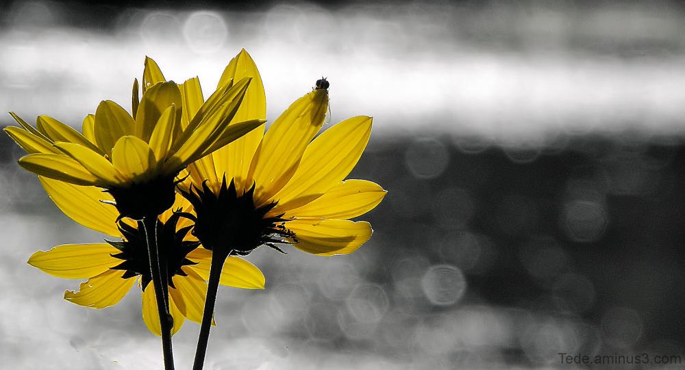 Fleur et mouche