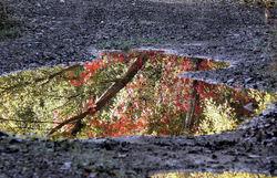 Au royaume du symbolisme l'automne est rayonnant