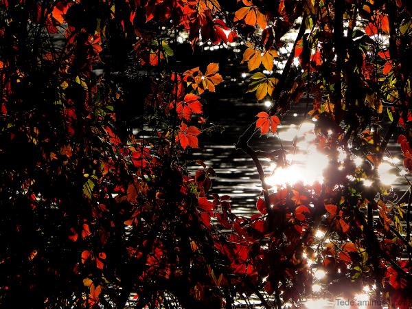 Les feuilles en automne