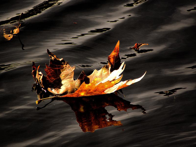 Sème  l'automne  sur  les  étangs...