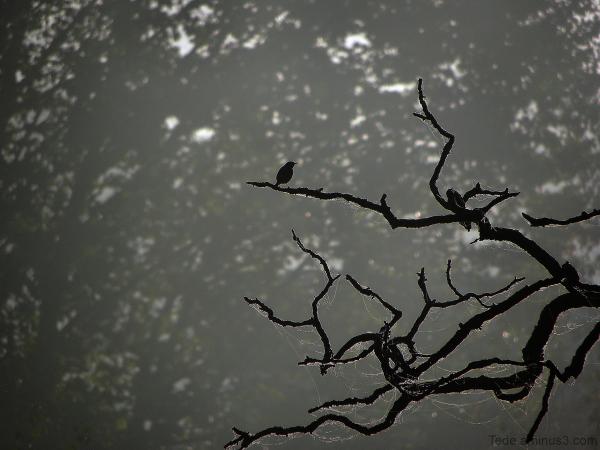 L'oiseau rêveur