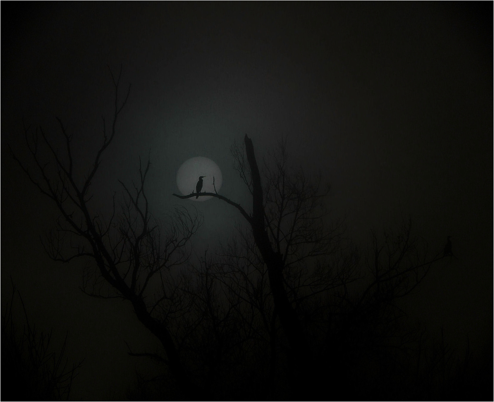 Lune et cormoran