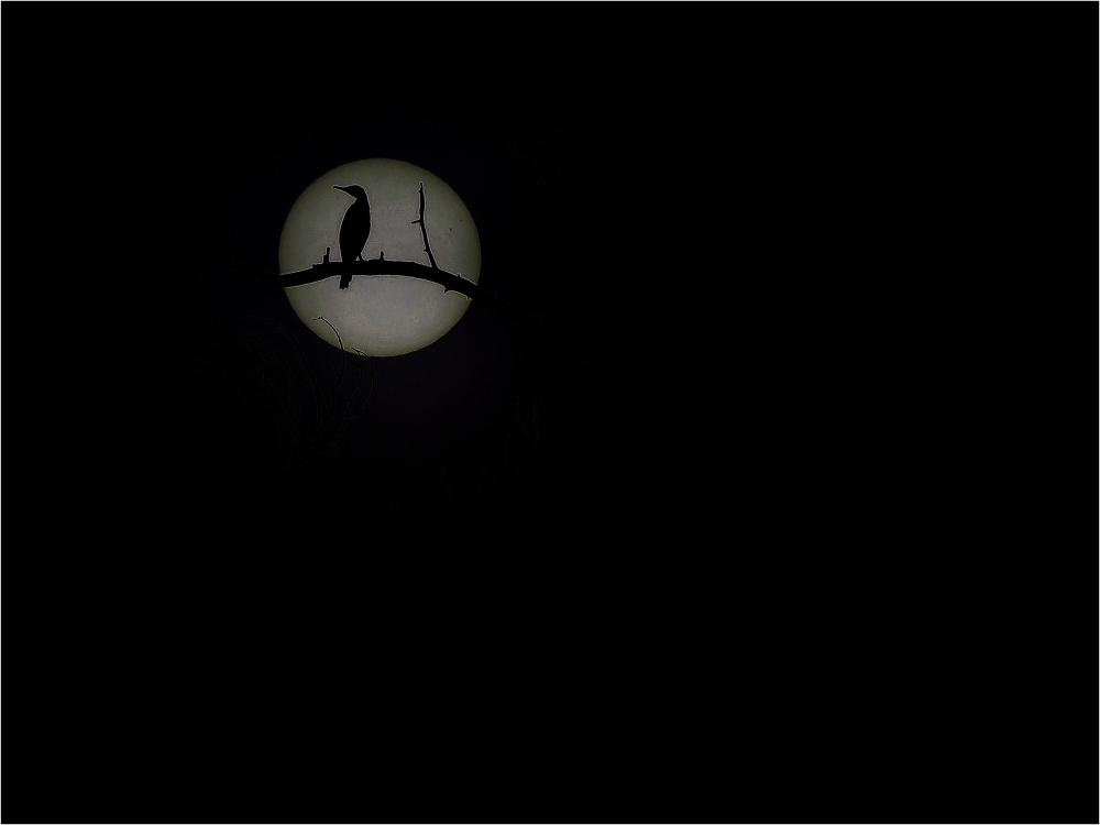 Oiseau et lune
