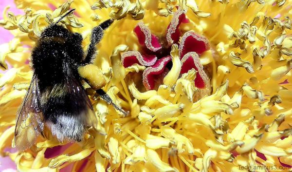 Au  palais  du  pollen...