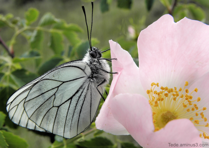 The  treasure  of  the  butterfly...