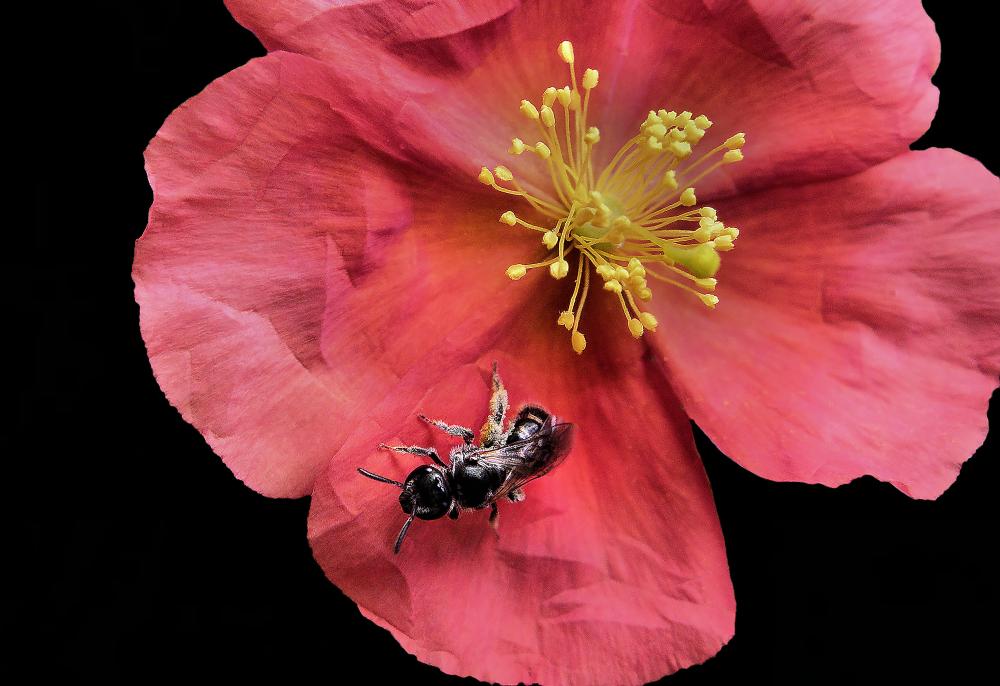 Insecte et fleur
